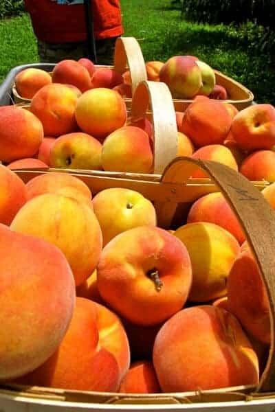 how to can peaches- fresh peaches