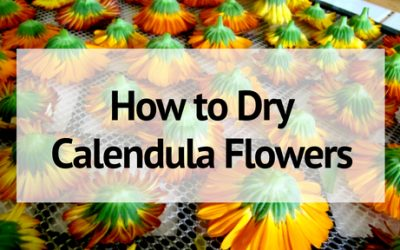How to Dry Calendula Flowers