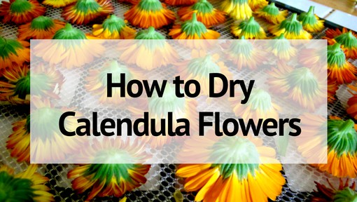 How to Dry Calendula Flowers