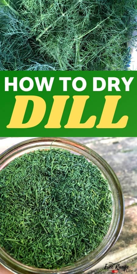 how to dry dill text with pictures of fresh and dried dill