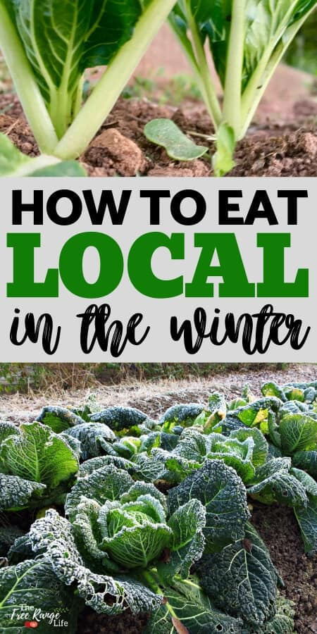how to eat local in the winter with bok choy and frost covered cabbage