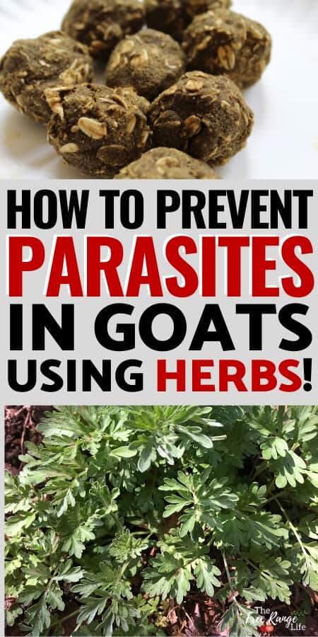 how to prevent parasites in goats using herbs