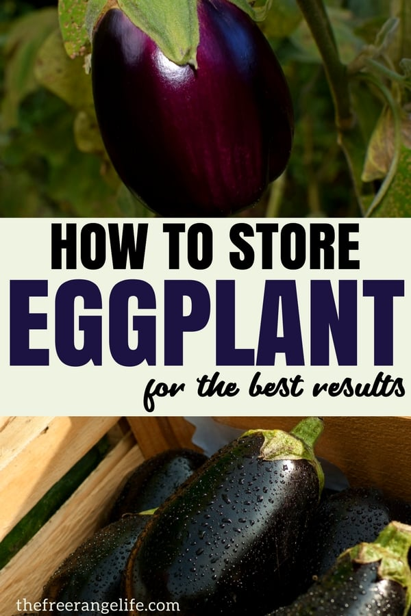 How to Store Eggplant- fresh or from the store- for the best results