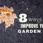 8 Ways to Improve Your Garden Soil for Free