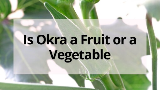 Is Okra a Fruit or a Vegetable? (and Does it Matter…)