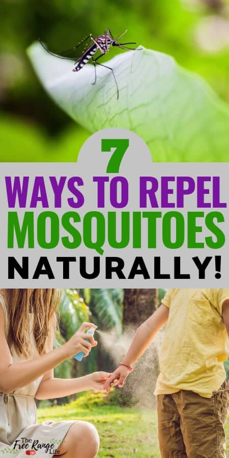Mosquitoes making summer miserable? Use these 7 Natural Mosquito Repellent ideas to help you get rid of mosquitoes and enjoy being outside more...