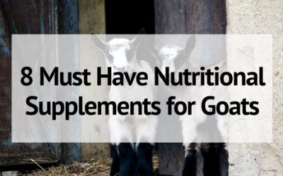 8 Must Have Nutritional Supplements for Goats
