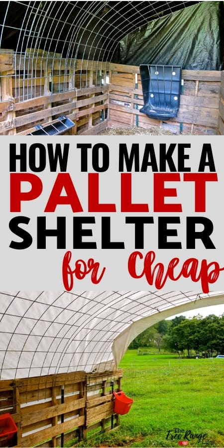 Pallet Shed Plans: Learn how to make a quick shelter out of pallets! Great for a run-in shed for goats, alpacas or any other farm animal!