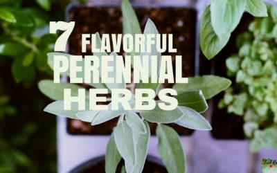 7 Flavorful Perennial Herbs You Need in Your Garden