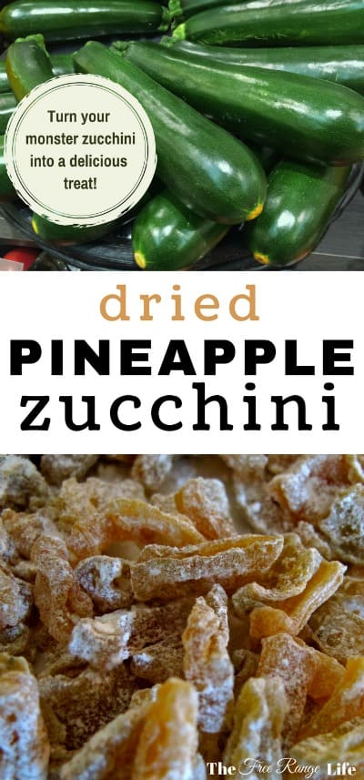 Dehydrating zucchini can be fun and tasty! Make this pineapple flavored dried zucchini candy!