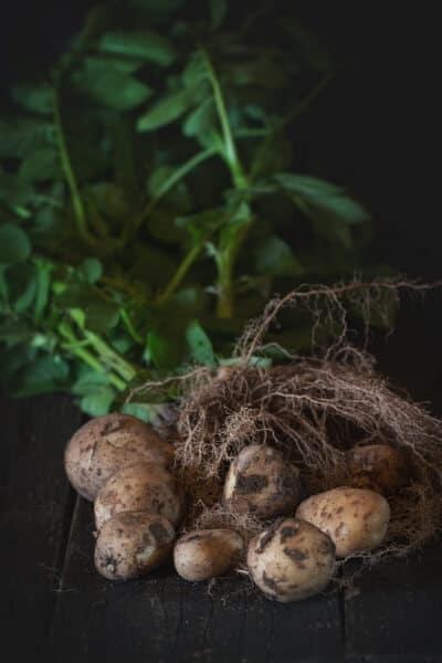 The Best Potato Companion Plants for Your Backyard Garden
