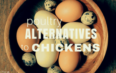 Poultry Alternatives to Chickens
