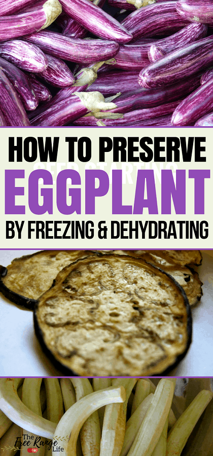 Food Preservation: Do you have a bumper crop of eggplant in the garden? Learn how to preserve eggplant by freezing and dehydrating to enjoy it all year long!