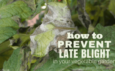 How to Prevent Late Blight in Your Garden