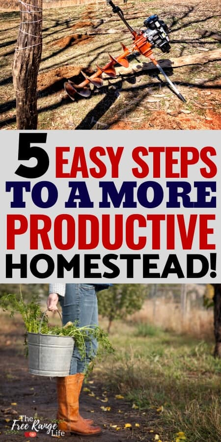 5 easy steps to a more productive homestead text with woman holding a bucket of scraps and a auget for drilling fence posts