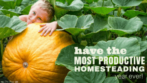 Do you have a long list of things to accomplish on your homestead? Learn the steps to having the most productive homesteading year ever!
