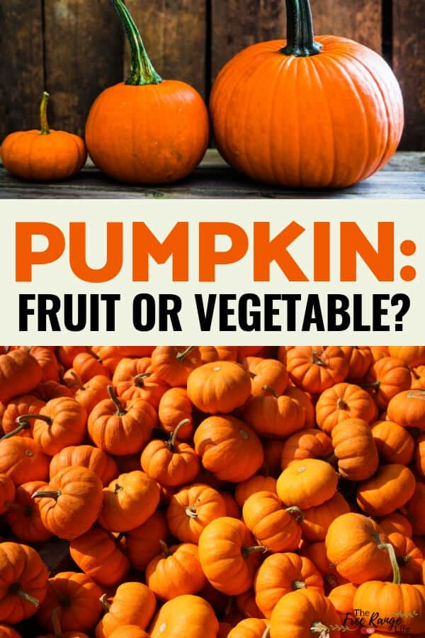 Is Pumpkin a Fruit or Vegetable? Find out what the difference is and why the asnwer isn't so clear.