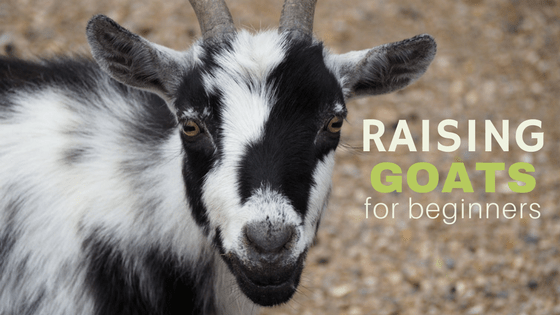 A free, 5 day email course! The Get Your Got e-course will get you ready to bring home your first goats!