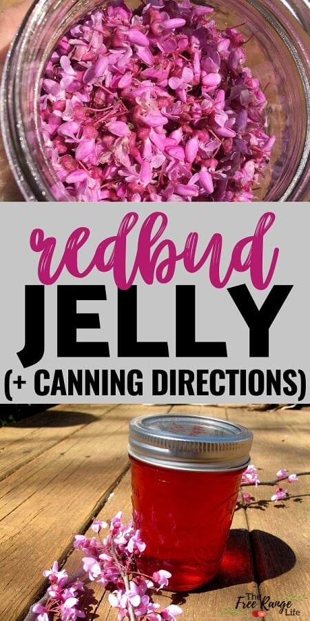 redbud jelly + canning directions