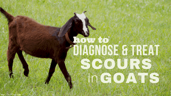 Diagnosing and Treating Scours in Goats