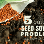 Common Outdoor Seed Sowing Problems