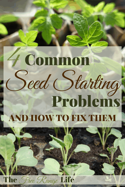 Trouble shoot your common seed starting problems. Learn about the top seed starting problems and how to fix them for good!