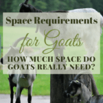Space Requirements for Goats