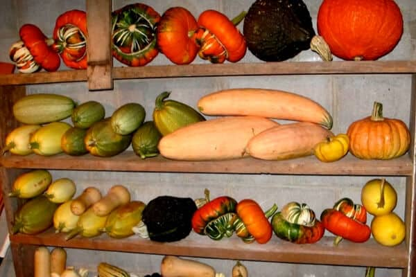 shelf of various winter squash types