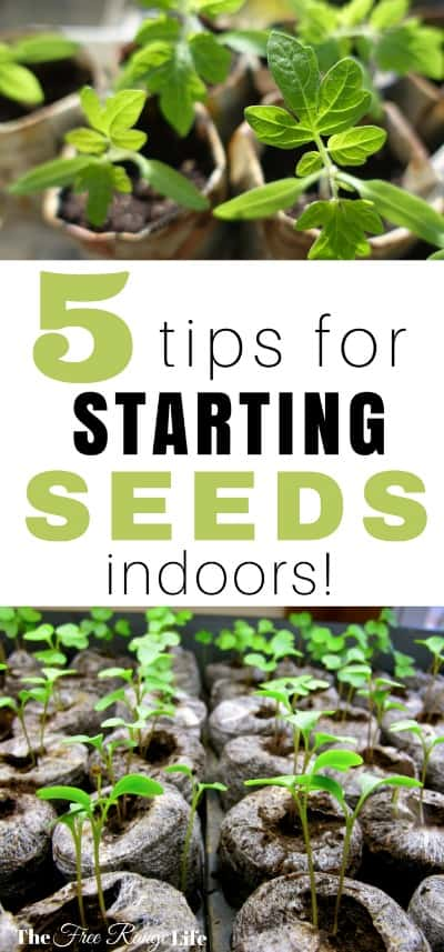 how to start tomato seed indoors