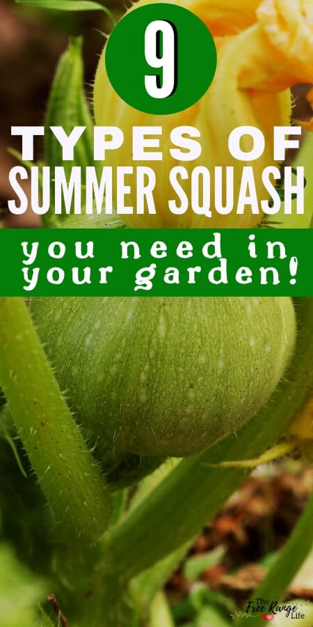 9 types of summer squash you need in your garden