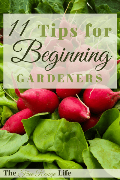 11 Tips for Beginning Gardeners! Get ready to grow your best garden ever!