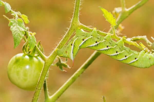 16 Way to Use Companion Planting to Control Pests Naturally