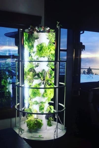 Tower garden indoors with grow lights by a window