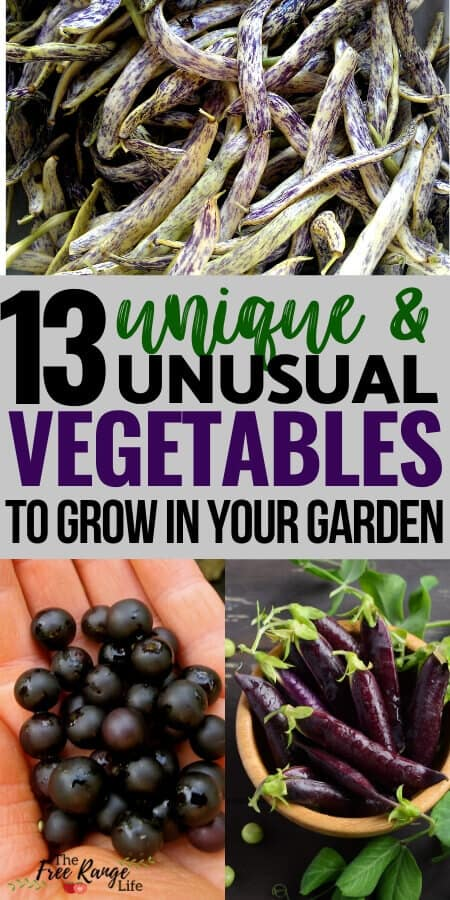 13 unique and unusual vegetables to grow in the garden text
