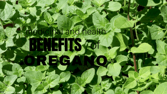 The Many Uses and Benefits of Oregano